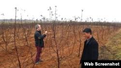 유럽의 정부 간 기구인 국제농업생명과학센터 관계자(왼쪽)가 북한 과수원의 나무를 살피고 있다. 사진출처=국제농업생명과학센터 홈페이지.