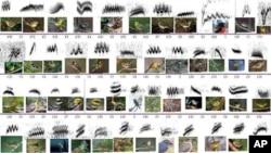 Rosetta kamen za ptice