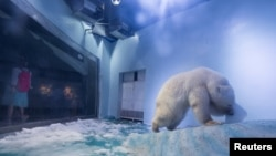 A polar bear is seen in an aquarium at the Grandview mall in Guangzhou, Guangdong province, China, July 27, 2016.