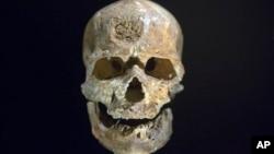 Tengkorak Cro-Magnon berusia 28.000 tahun yang ditemukan di Dordogne, Perancis, ditampilkan di Musee de l'Homme di Paris (14/10).
