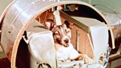 Quiz - Animal Astronauts
