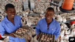 美国政府、技术服务公司和卡吉尔公司合作帮助改造了莫桑比克的家禽业