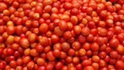 Praga destrói 48 mil toneladas de tomate em Benguela - 2:10