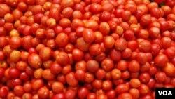 Toneladas de tomates afectados por praga, Benguela