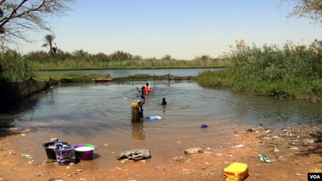 The re-introduction of indigenous prawns into this enclosed area in Lampsar village, in northern Senegal is reducing the rate of schistosomiasis infections.  (VOA/J. Lazuta)