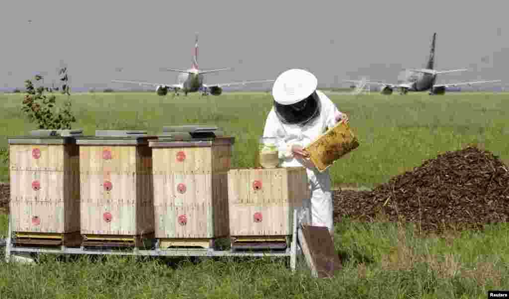 لکڑی کے ڈبوں میں چھتے کو رکھا جاتا ہے اور شہد اکھٹا کرنے والی مکھیاں ان ڈبوں میں آسانی سے آ جا سکتی ہیں۔