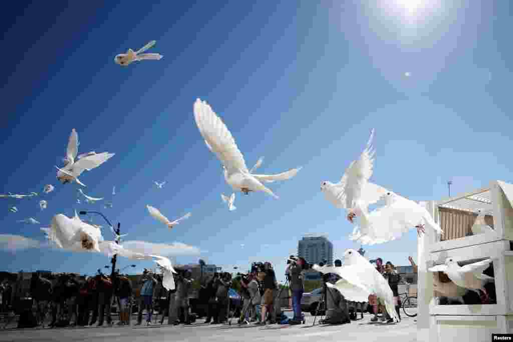 白鸽在美国内华达州拉斯维加斯市政厅广场飞翔,人们为这场大规模射击惨案的每名受害者放鸽子(2017年10月7日)。