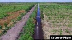 Kanal air membelah lahan gambut di Kalimantan Tengah. (Nordin/Save Our Borneo)