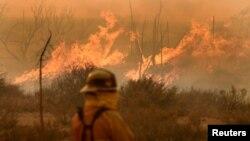 16일 미국 캘리포니아주 샌버나디노 국유림에서 소방관이 타오르는 불길을 지켜보고 있다. 대형 산불로 샌버나디노 북부에서 8만여명의 주민에게 긴급대피령이 내려졌다.