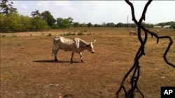 Scene in drought hit Texas