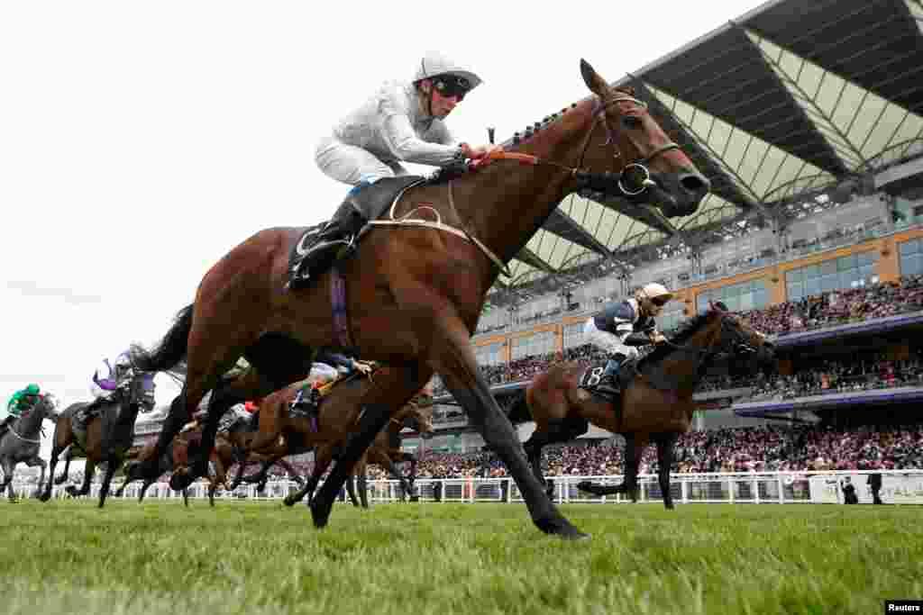 លោក William Buick កំពុងជិះសេះឈ្មោះPermian បានយកឈ្នះការប្រកួត3.05 King Edward VII Stakes នៅទីវាលប្រណាំងសេះRoyal Ascot ក្នុងទីក្រុង Ascot ប្រទេសអង់គ្លេស។