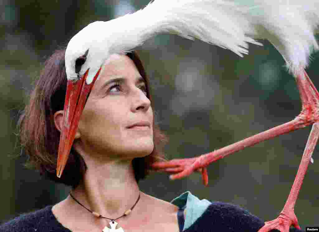 Bird trainer Valerie Recher trains a stork in Frouzins near Toulouse, France.