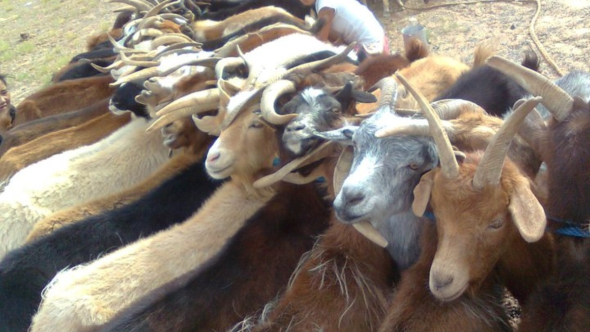 Diseases Jump Borders to Infect African Livestock