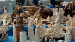 China Destroys Illegal Wildlife Products