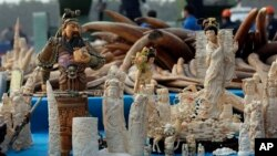 China destroyed about 6 tons of illegal ivory from its stockpile.