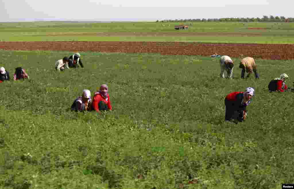 People work in a field in Aleppo's countryside, April 6, 2014.