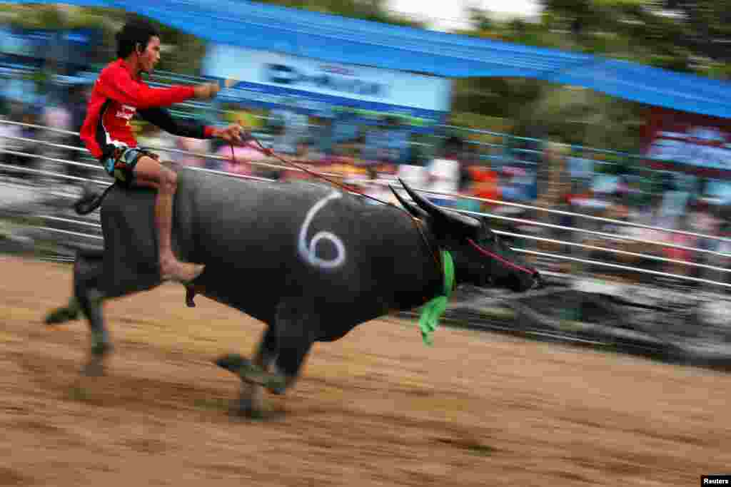 A jockey competes in Chonburi's annual buffalo race festival, east of Bangkok, Thailand.