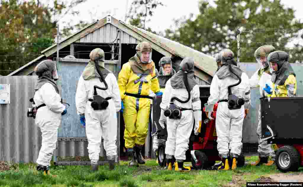 Employees from the Danish Veterinary and Food Administration and the Danish Emergency Management Agency in protective equipment are seen amid the COVID-19 outbreak at a mink farm in Gjoel, North Jutland, Denmark.