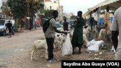 Moussa Tall tient son mouton de Tabaski, Sénégal, le 10 août 2019. (VOA/Seydina Aba Gueye)