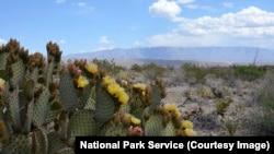 Une plante de cactus dans le desert de Chihuahuan