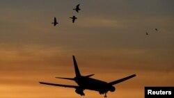 Burung-burung melintas sebuah pesawat yang sedang mendarat di Bandara Heathrow di London, Inggris, 30 Oktober 2018.