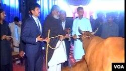 فلک شیر، غلام عباس بھٹی اور ظفر اقبال سے گائے وصول کرتے ہوئے