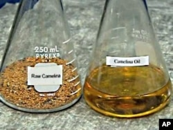 The US Navy is testing a fuel for its fighter jets that is 50 percent petroleum-based and 50 percent derived from a seed called camelina.