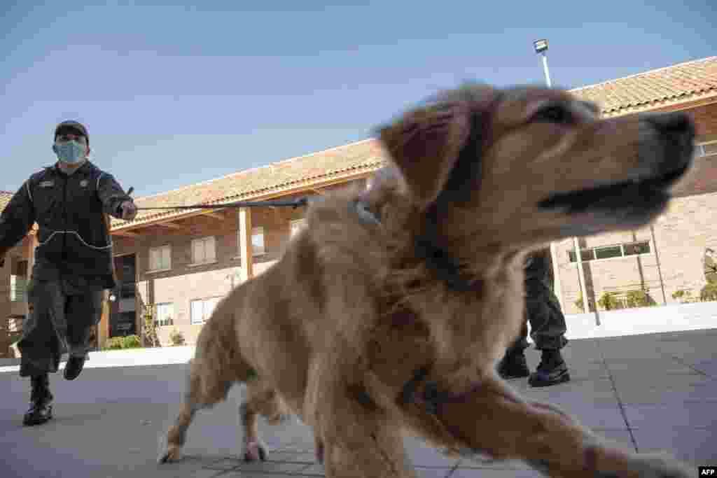 ان مخصوص کتوں کو تربیت کے دوران کرونا وائرس کے مریضوں سے آنے والی 'بو' سے آشنا کیا جا رہا ہے تاکہ وہ ایسے افراد کو شناخت کر سکیں جو اس وبا کا شکار ہیں۔