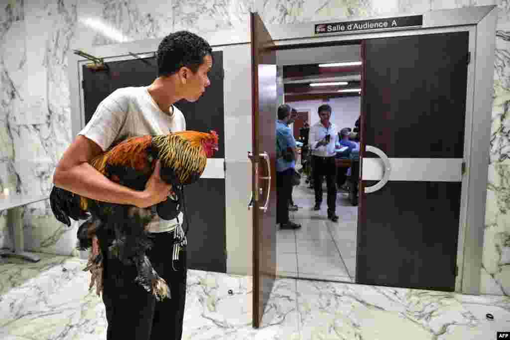 A woman holds a rooster inside the high court (Tribunal de Grande Instance) where the justice is set to rule on whether a lively cockerel should be considered a neighborly nuisance in a case that has led to shreiks of protest in the countryside.