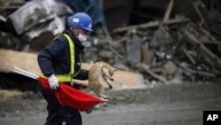 這名工作人員星期五在福島帶著一隻貓離開一片瓦礫