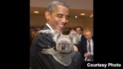 奥巴马总统在G20和树袋熊(考拉,无尾熊)合照(照片来自白宫网站)