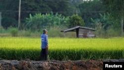 Un agriculteur travaille dans son champ de riz dans la province de Nakhonsawan.