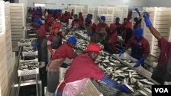 Fabrica de processamento de pesca