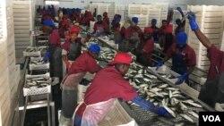 Antigo ministro e companhia angolana são alvo de investigação em desvio de quotas de pescas de cerca de 10 milhões de dolares