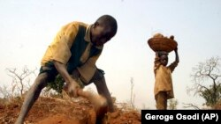 Gumba Mohammed carries yams on a basket as his elder brother, Limam Mohammed, digs up yams on a farmland given to evicted Zimbabwean farmers in Shonga, Nigeria, Jan. 19, 2005. West African governments like Nigeria are eager to welcome white Zimbabwean fa