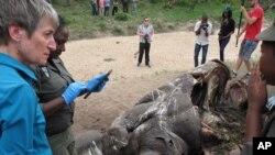 Le Secrétaire américain de l'Intérieur Sally Jewell parle avec les enquêteurs près de la carcasse d'un rhinocéros abattu par des braconniers dans le parc national Kruger, la plus grande réserve de faune de l'Afrique du Sud, 29 janvier 2016.