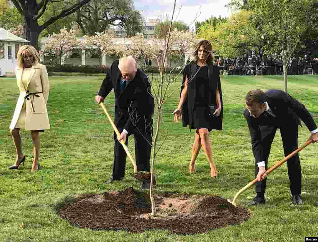 法国总统马克龙今年4月访美送给川普一棵树 后来这棵树从白宫的草坪上不翼而飞 原来是被挖出来隔离检疫了