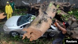 Seorang pekerja menggunakan gergaji listrik untuk memindahkan batang pohon besar yang jatuh di atas mobil akibat topan Rammasun (secara lokal disebut Glenda) yang menimpa Makati city di Manila (16/7).