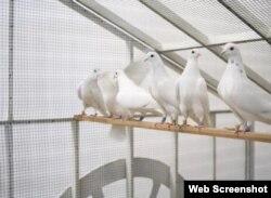 ماشین کبوترها، در سال 1987 - PPOW Gallery Photo