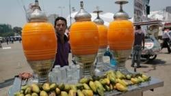 Réduction de la récolte des mangues en Égypte