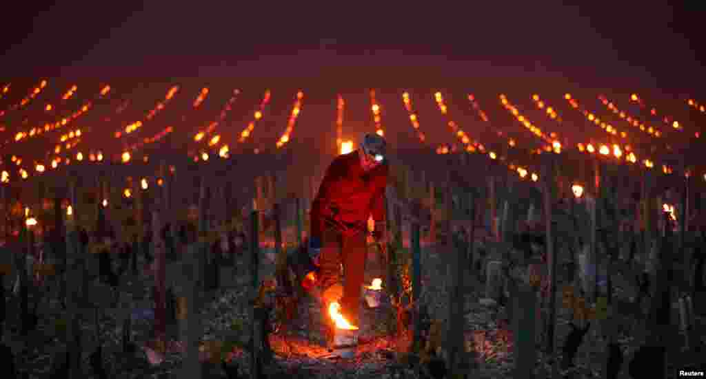 Workers and wine growers light heaters early in the morning to protect vineyards from frost damage outside Chablis, France.