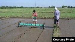စုေပါင္းလယ္ယာ လုပ္ႏိုင္မလား Myanmar Farm (Photo credit to Pioneer Agrobiz)