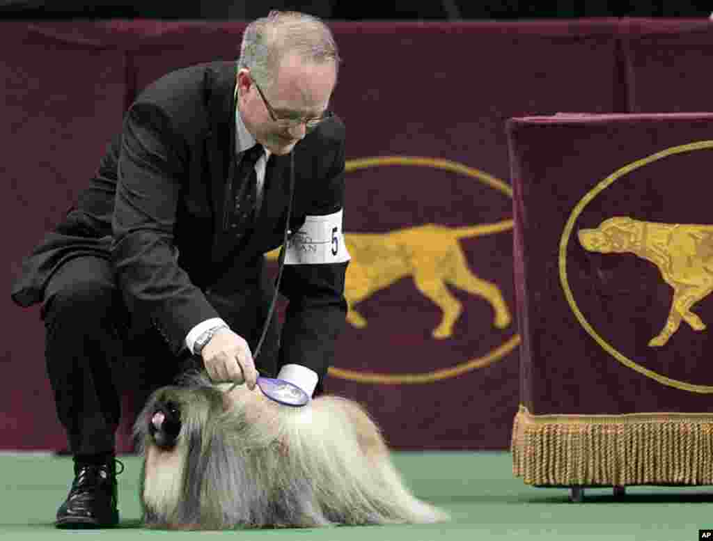 David Fitzpatrick combs Malachy, a Pekingese, during the 136th annual Westminster Kennel Club dog show in New York, February 14, 2012. (AP)