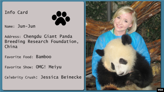 OMG!'s Jessica Beinecke visits her fan, panda Jun-Jun at the Chengdu Giant Panda Breeding Research Foundation in Chengdu, China.