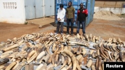 A Vietnamese man identified as Huu Dinh Khao (L) and two Togolese men stand next to a haul of ivory tusks after being seized by security forces at the port of Lome, Jan. 28, 2014.