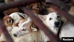 Data Dog Meat Free Indonesia menyebutkan 13.700 ekoranjingdibunuh untuk dikonsumsisetiap bulan di wilayah Solo, Jawa Tengah. (Foto: ilustrasi).