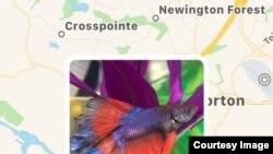 Aplikacioni Google Maps duke treguar se ku janë marrë fotografitë