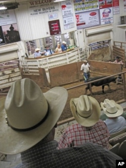 Livestock auctions have been busy this year as ranchers have sold off their herds.