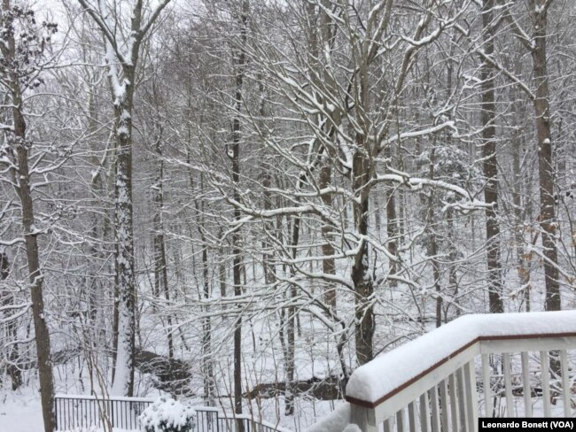 Vista del Parque Nacional Prince William, en el norte de Virginia, el domingo 13 de enero de 2019. Foto: Leonardo Bonett, VOA.