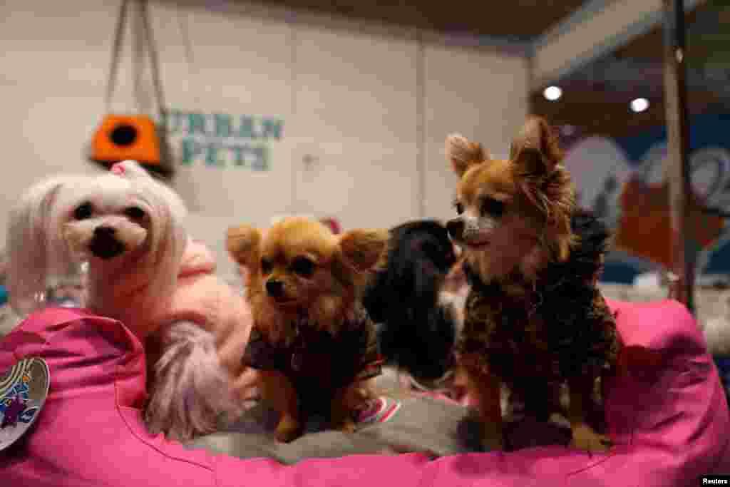 حضور سگ ها در فستیوال حیوانات خانگی در پرتغال